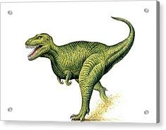 Tyrannosaurus Rex Acrylic Print by Deagostini/uig