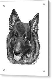 Acrylic Print featuring the drawing Tyson -038 by Abbey Noelle