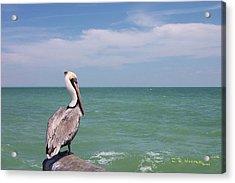 Ubiquitous Pelican Acrylic Print