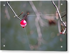 Acrylic Print featuring the photograph Ughh by Greg Graham