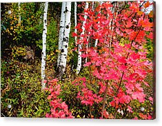 Uinta Colors Acrylic Print by Chad Dutson