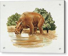 Uintatherium Acrylic Print by Deagostini/uig/science Photo Library