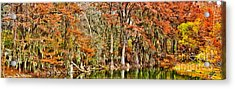 Ultimate Cypress Panoramic Acrylic Print