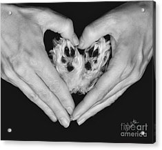Unconditional Love Acrylic Print by Andrea Auletta