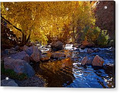 Under A Gold Canopy Acrylic Print by Jim Garrison