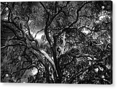 Under A Tree In Black And White Acrylic Print
