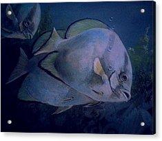 Under Blue. Acrylic Print by Ruben  Llano