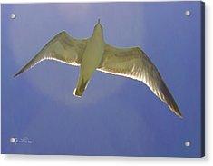 Under His Wings IIi Acrylic Print