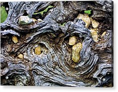 Under Roots Of Dead Tree Acrylic Print