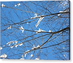 Acrylic Print featuring the photograph Under Snowy Branches 2 by Dennis Lundell