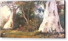 Under The Ancient Gum Tees Acrylic Print by Jan Matson