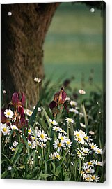 Acrylic Print featuring the photograph Under The Apple Tree by Penny Hunt