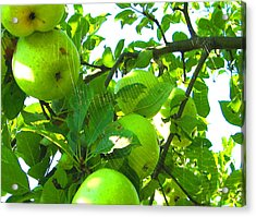 Under The Apple Tree Acrylic Print