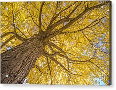 Under The Autumn Tree Acrylic Print