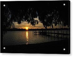 Under The Bald Cypress Acrylic Print by Michele Kaiser