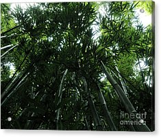 Under The Bamboo Haleakala National Park  Acrylic Print by Vivian Christopher