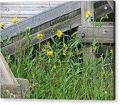Acrylic Print featuring the photograph Under The Boardwalk by Laurel Powell