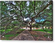 Under The Century Tree Acrylic Print by David Morefield