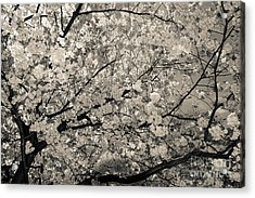 Under The Cherry Tree - Bw Acrylic Print by Hannes Cmarits