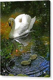 Under The Cobs Watchful Eye Acrylic Print