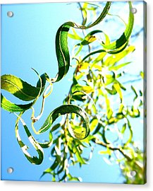 Under The Curly Willow Tree Acrylic Print by Tracy Male