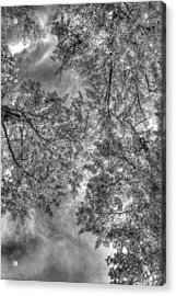 Acrylic Print featuring the photograph Under The Gray  by Kevin Bone
