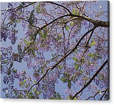 Under The Jacaranda Tree Acrylic Print by Rona Black