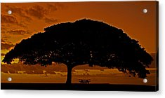 Under The Monkeypod Tree Acrylic Print by Brian Governale