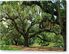 Under The Oaks Acrylic Print by Bob Sample