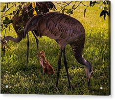 Under The Orange Tree Acrylic Print by Zina Stromberg