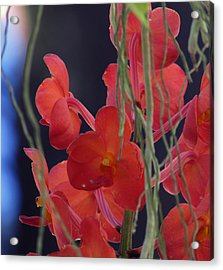 Acrylic Print featuring the photograph Under The Sea by Debi Singer