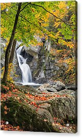 Under The Tree Acrylic Print by Bill Wakeley
