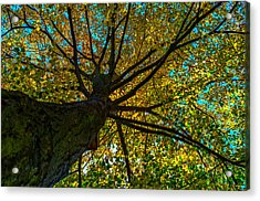 Under The Tree S Skirt Acrylic Print