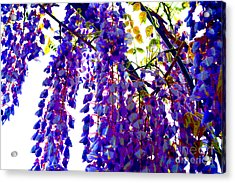 Under The Wisteria Acrylic Print by Alys Caviness-Gober