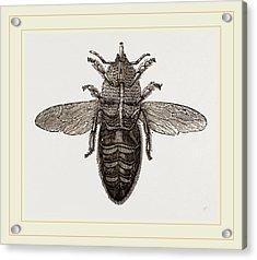 Under View Of Neuter Bee Acrylic Print