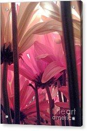 Underbush  Acrylic Print by Susan Townsend
