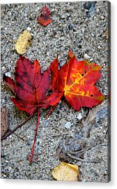 Underfoot Acrylic Print by Mary Sullivan