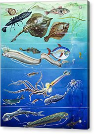 Underwater Creatures Montage Acrylic Print by English School