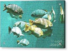 Underwater Fish Swimming By Acrylic Print