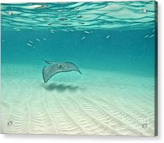 Underwater Flight Acrylic Print