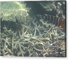 Underwater - Long Boat Tour - Phi Phi Island - 011336 Acrylic Print by DC Photographer