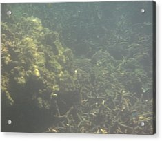 Underwater - Long Boat Tour - Phi Phi Island - 011338 Acrylic Print by DC Photographer