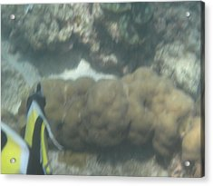 Underwater - Long Boat Tour - Phi Phi Island - 011353 Acrylic Print by DC Photographer
