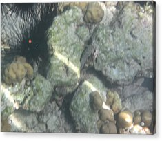 Underwater - Long Boat Tour - Phi Phi Island - 011369 Acrylic Print by DC Photographer