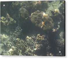 Underwater - Long Boat Tour - Phi Phi Island - 011371 Acrylic Print by DC Photographer