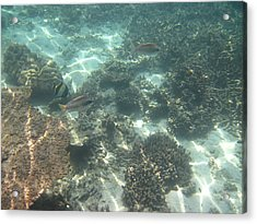 Underwater - Long Boat Tour - Phi Phi Island - 011377 Acrylic Print by DC Photographer