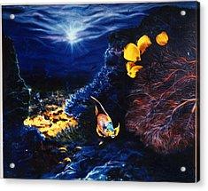 Underwater Paradise Acrylic Print by Dan Townsend
