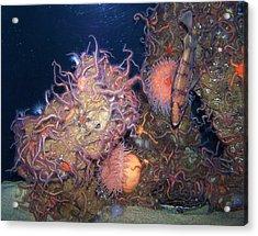 Underwater Sea Life Acrylic Print by Christine Drake
