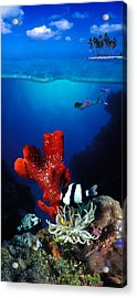 Underwater View Of Sea Anemone Acrylic Print by Panoramic Images