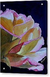 Unfolding Rose Acrylic Print by Ruth Bodycott